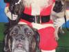 christmas_2009