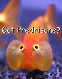 crohns meme prednisone crohn's disease memes nonsense from wyatt fuller,Crohns Meme